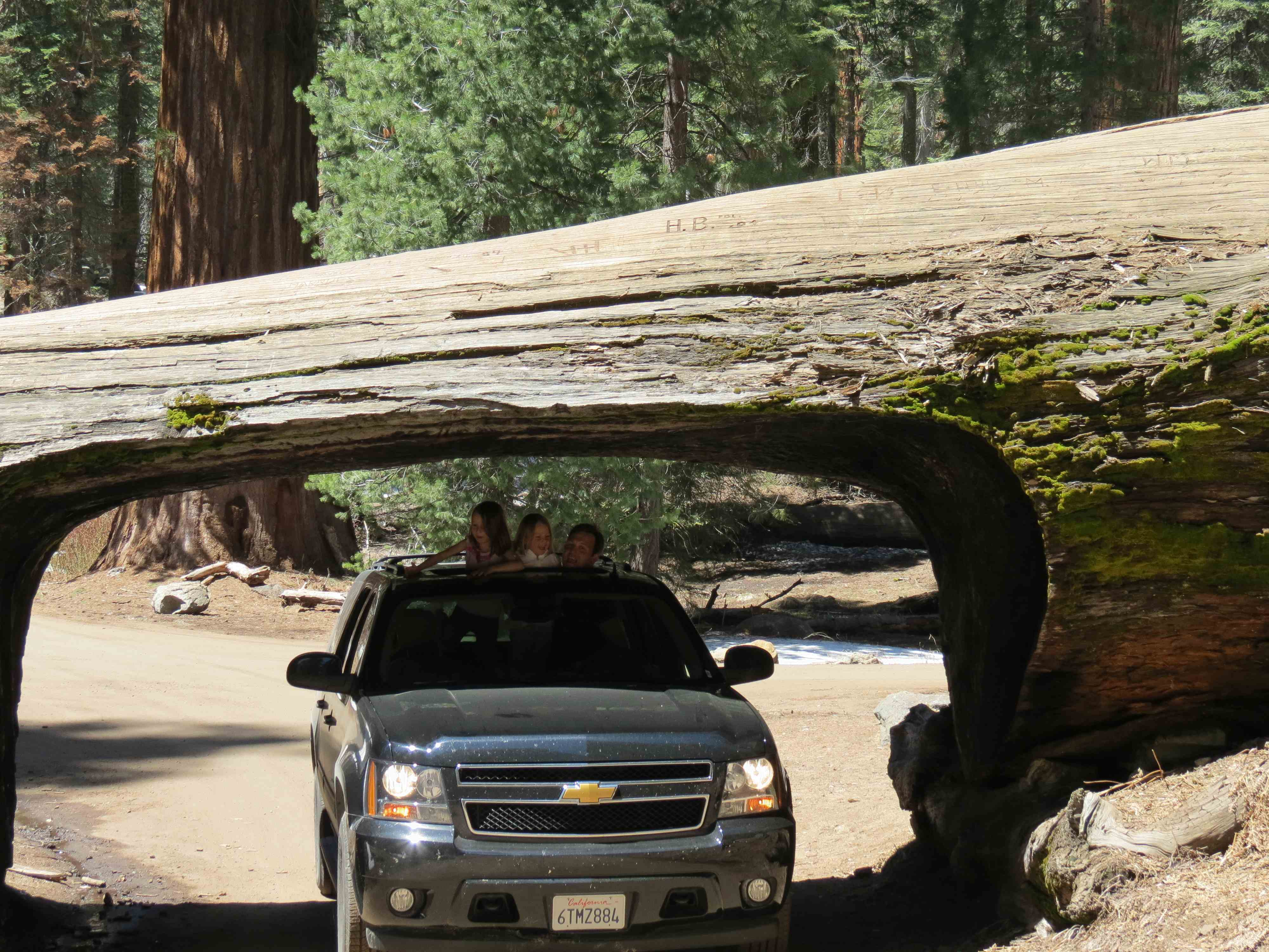 sequoia national park single muslim girls Sequoia national park is a bucket-list destination,  by volume it is the largest single-trunk tree on earth  the girl with the hat.