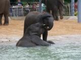 Baby elephants anddinosaurs