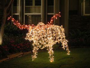 Festive Texas Longhorn