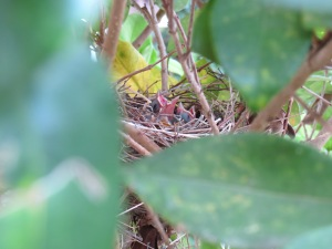 Baby birds day 1