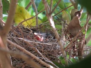 Baby birds day 2