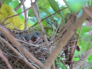 Baby birds day 4