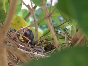 Baby birds day 5