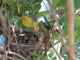 The baby birds are growing