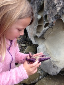 The Little One examining a sea star